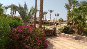 Египет,Шарм-Эль-Шейх,отель Club El Faraana Reef